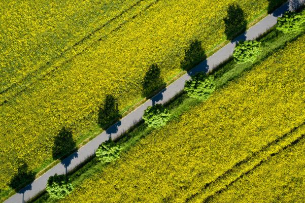 Luftaufnahme, Felder, Drohne, Landwirtschaft